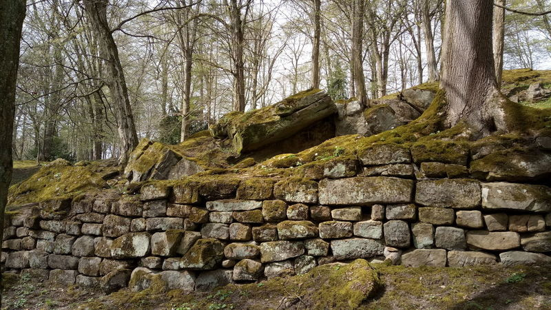 Wall Stones Tree Tree Trunk Branch Sky Built Structure Architecture