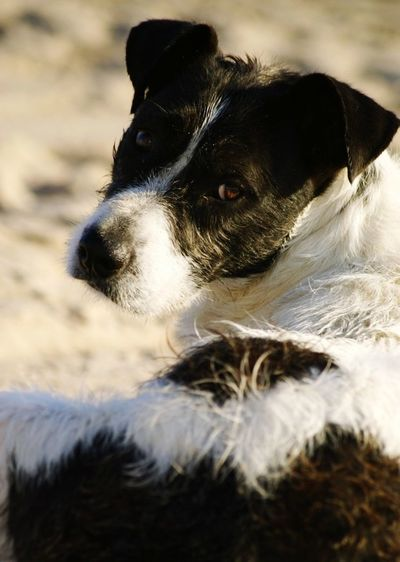 Animal Dog Pets Domestic Animals Animal Themes One Animal Sea Loyalty Fisherdog Brown Eyes