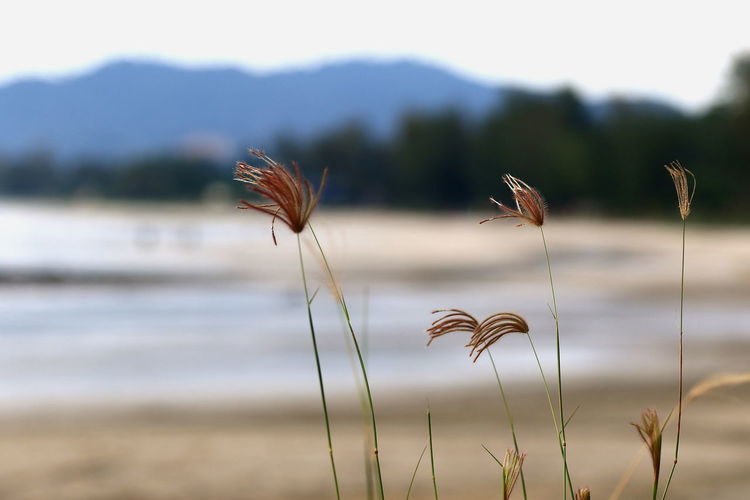 Grass flowers near the beach with wondeful morning. Sunrise Beach Outdoors Landscape Sea No People