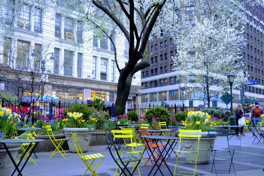 Herald Square NYC City Tree Flower Architecture Building Exterior Built Structure The Photojournalist - 2018 EyeEm Awards The Street Photographer - 2018 EyeEm Awards The Traveler - 2018 EyeEm Awards