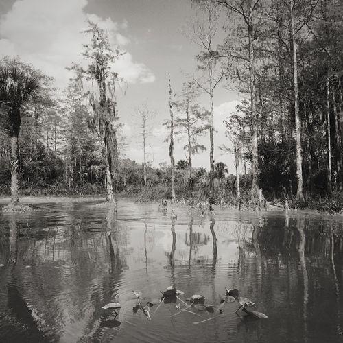 Swamp Blaclandwhite Airboat Ride Great Florida Water