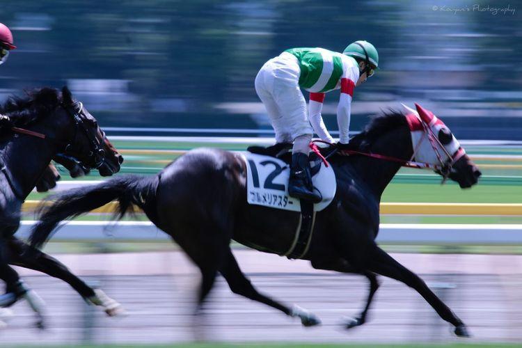 Racecourse Tokyo Racecource EyeEm Best Shots EyeEm Horse Panning Shoot Derby