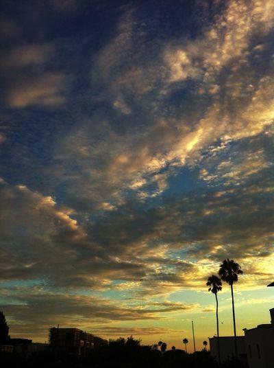 Santa Monica, California Get Your Guide Cityscapes