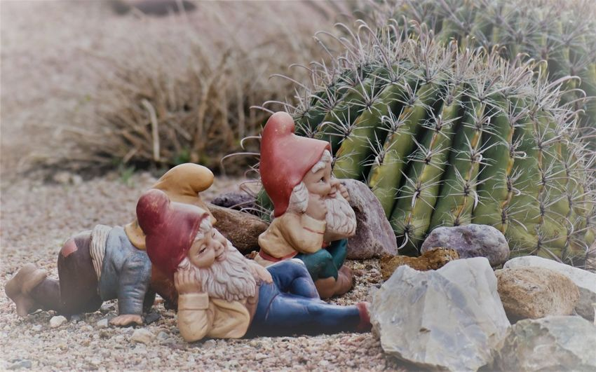 3 Nom 3 Years Cactus Gnomes Landscape Lazy No People Outdoors