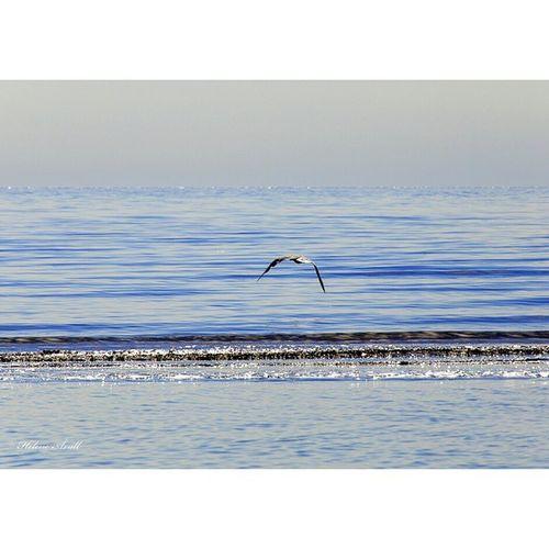 Seagull Birds Bird Water Sea Seagulls Seagull Waterfoam Silverstream Silverstrand Sunshineaddicted Summertime Summer Beach Beautiful Beauty Nature_pd Edits_bnw Bnw_edit Landscape