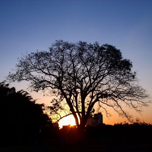 Tree Sunset Silhouette Nature Sky Beauty In Nature Bare Tree Tranquility Scenics No People Outdoors Tranquil Scene Clear Sky Landscape Branch Day