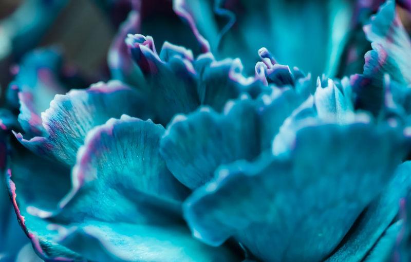 Full frame shot of blue flowers