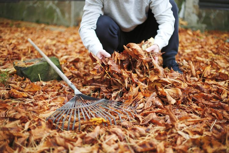 Man working on leaves on field