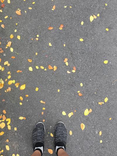 Walk in autumn,