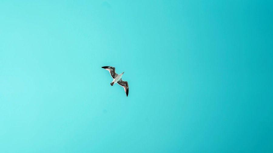 Freedom Fly