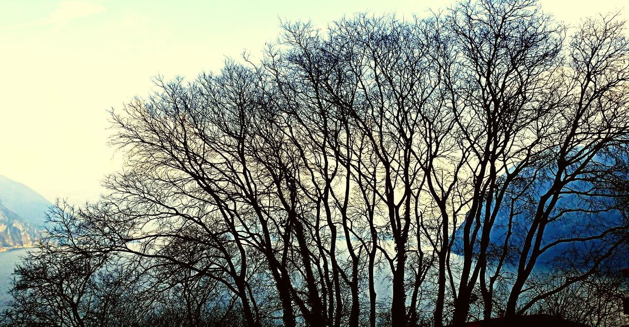 tree, bare tree, low angle view, sky, nature, branch, outdoors, no people, tranquility, beauty in nature, day, clear sky