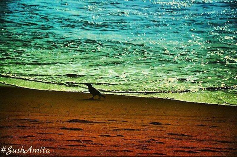 Sushamita Besantnagar Beachphotography Beach Elliotsbeach Water Turquoise Sand Bird Beachlovers Chennai Chennaiphotography Outdoorphotography Sochennai Ig_chennai Nammachennai Instapic Naturelovers Natgeonaturepic Natgeoindia Natgeo Natgeotravel Natgeotravelpic Perfocal Nikon nikonindia tamilnadu indiatravelsmind_soi
