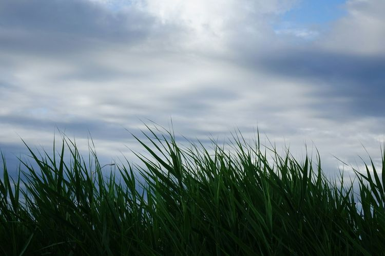 Sky And Clouds Clouds Grass Getting Inspired Beautiful EyeEm Nature Lover Cloudsporn Nature EyeEm Best Shots