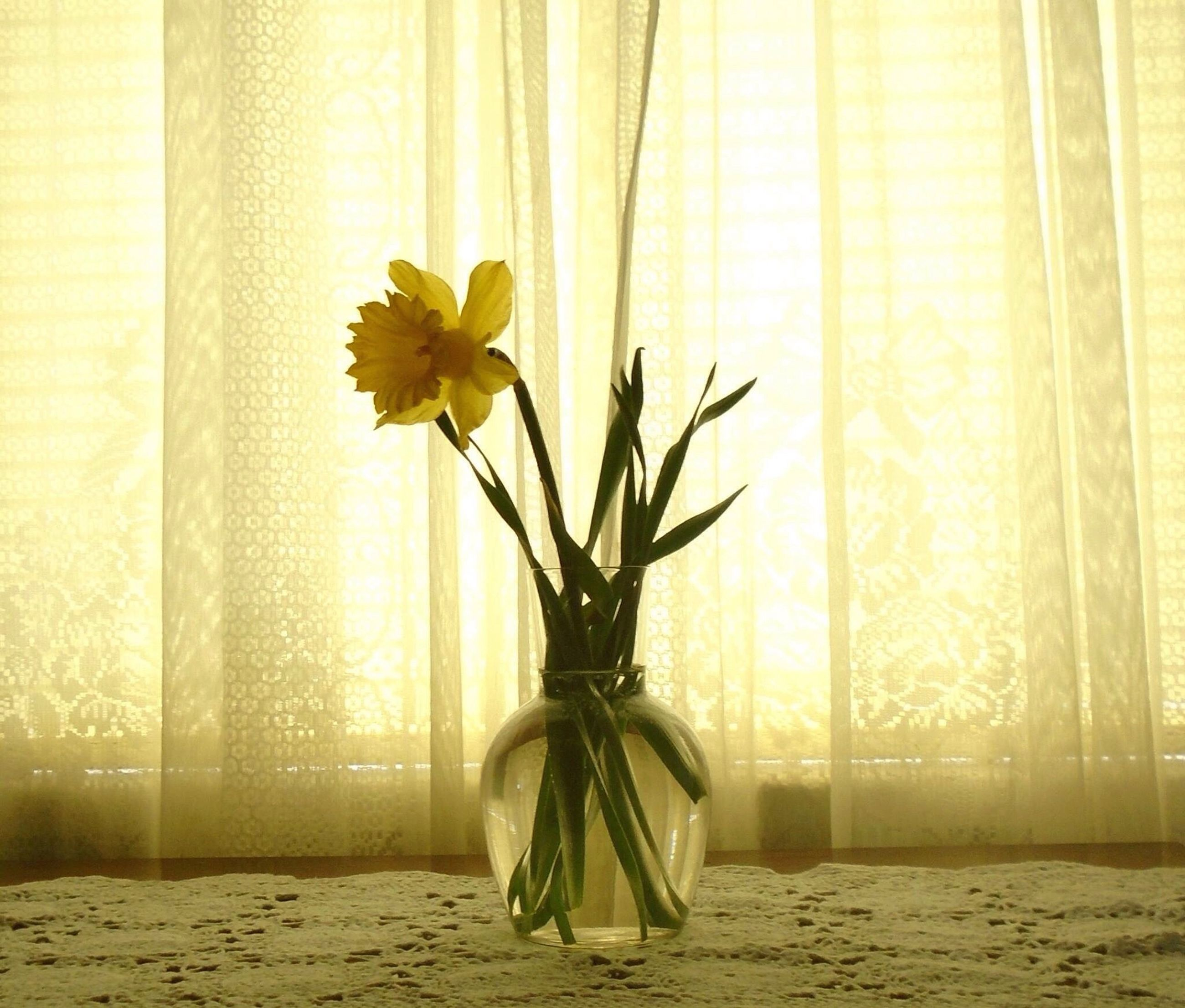 indoors, flower, vase, home interior, wall - building feature, curtain, fragility, petal, window, wall, freshness, potted plant, table, decoration, growth, yellow, flower arrangement, plant, shadow, no people