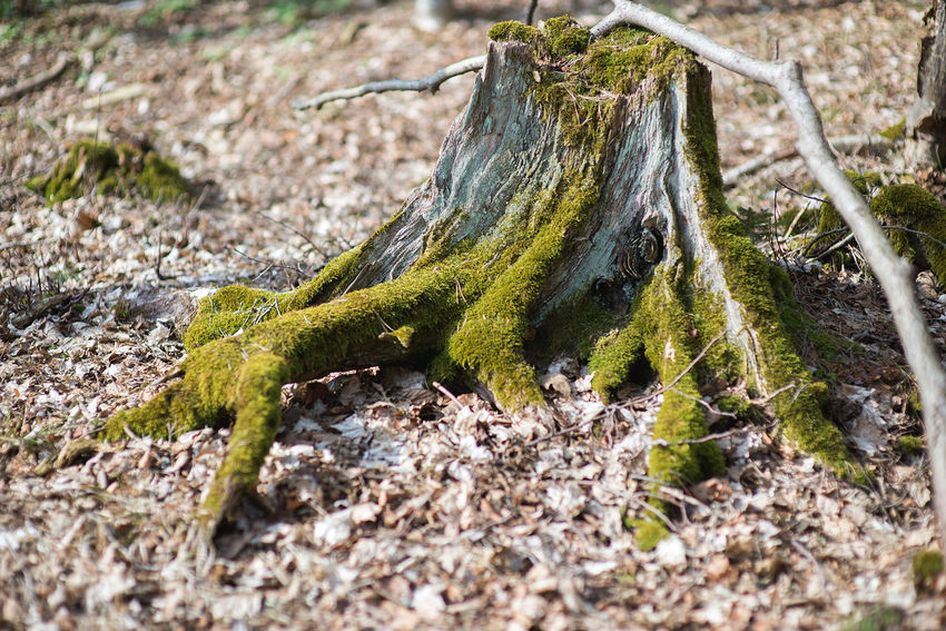Forestry Backgrounds Close-up Day Forest Forestry Industry Leaves Nature No People Outdoors Stem Strain Stump