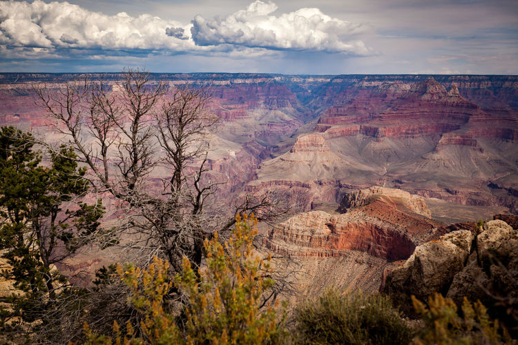 Watch on big scree if possible. Its worth it. :-) Dead Tree EyeEm Nature Lover Grand Canyon Nature Rock Tree USA Beauty In Nature Canyon Clouds Day Landscape Nature No People Outdoors Red Stone Scenics Sky Travel Destinations Wide Angle