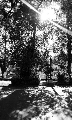 Garden Garden Photography Tree Silhouette Trees Tree_collection  Bnw_friday_eyeemchallenge Shadows & Lights Black & White Light And Shadow B&W Collection B&w Photography Monochrome _ Collection Blackandwhite Photography Sun Light Through Trees Sun Light