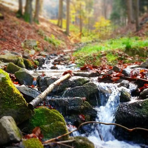 Podzim v Beskydech.. Autumn in Beskydy Autumn Beskydy Forest Sluice Czechrepublic Nature Priroda
