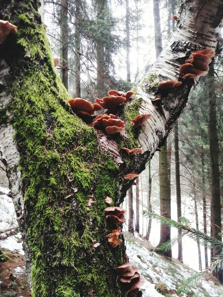 Tree Growth Nature Tree Trunk Branch Day Forest No People Plant Beauty In Nature Close-up Mushroom Pilz Baum Baumpilz Hartz Februar Bracket Fungus Bracket Fungi