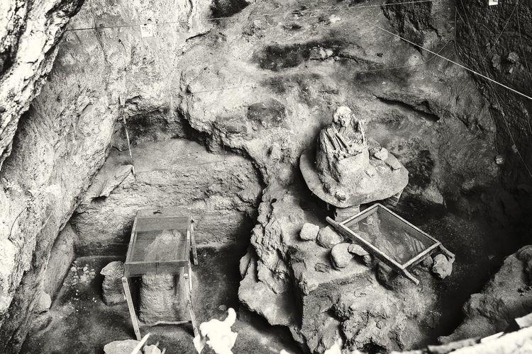 High angle view of an animal on rock