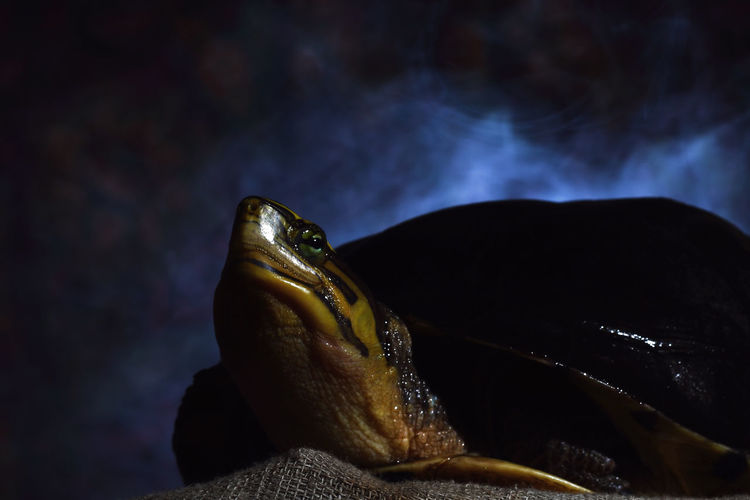 Close-up of tortoise on sack