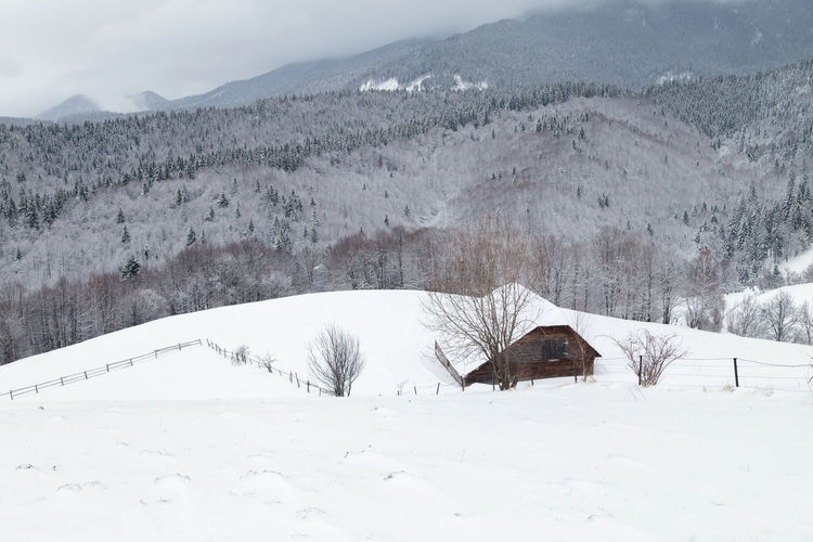 Winter rural landscape in Transylvania Alpine Carpathians Mountains Hills Houses Rural Trees Bran, Romania Countryside Day Forest Landscape Mountain Nature Outdoors Scenics Snow Snowcapped Mountain Weather Winter