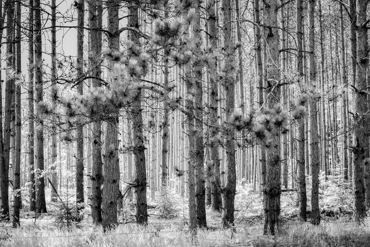 Tree Trunks On Field At Forest
