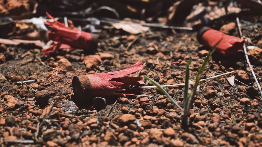 I'll be riding shotgun Close Up Photography Bullet Gun Shotgun EyeEm Selects Selective Focus Day No People Nature Plant Part Leaf Close-up Land Sunlight Outdoors