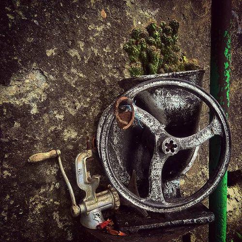 Gagra, Abhazia Gagra Abhazia Still StillLife Wheel Strange Cactus Гагра абхазия кактус