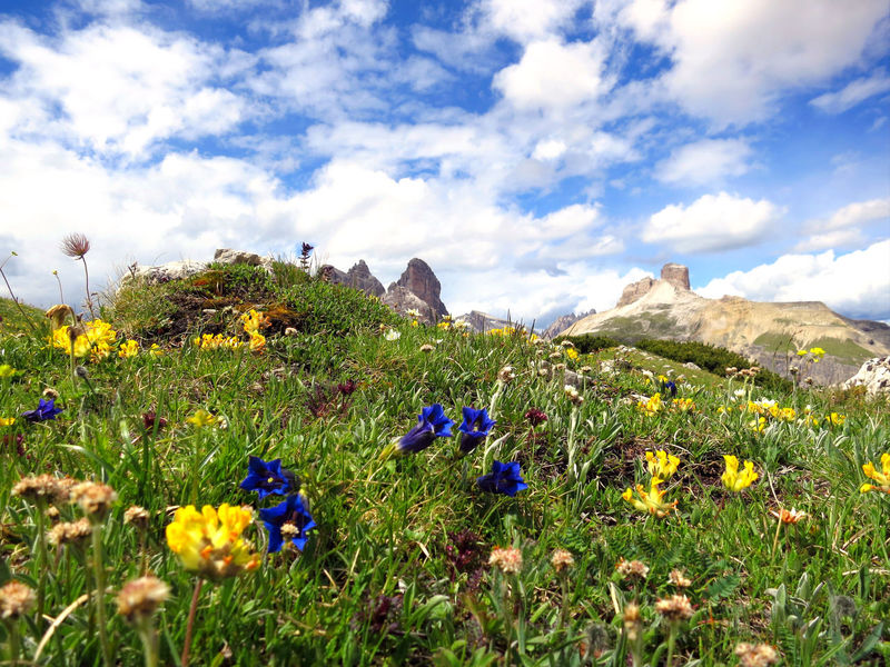 Gentian Flower Beauty In Nature Cloud - Sky Crocus Day Field Flower Flower Head Fragility Freshness Grass Growth Landscape Mountain Mountain Range Nature No People Outdoors Plant Scenics Sky Tranquil Scene Tranquility Uncultivated Wildflower Lost In The Landscape