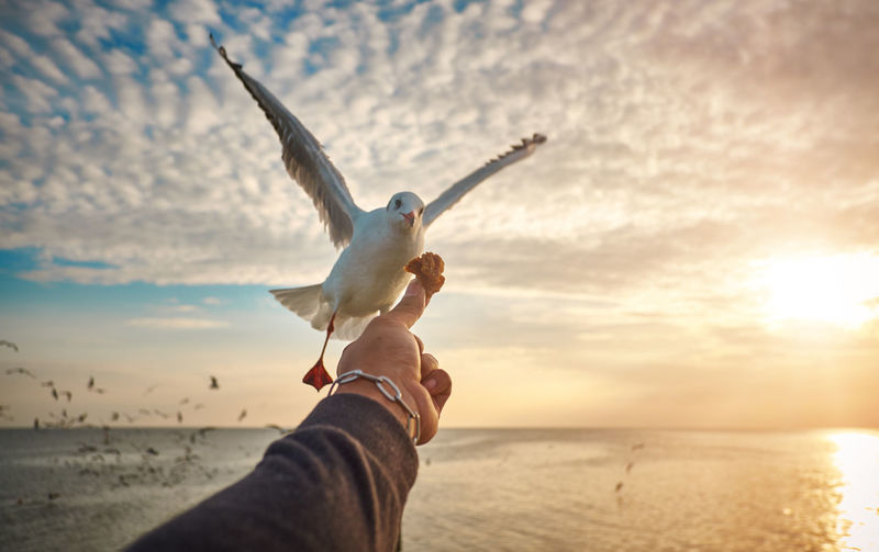Cropped Of Hand Feeding Seagull By Sea At Sunset