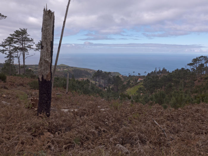 Hike in the west of Madeira overlooking the Atlantic Ocean. Madeira Atlantic Ocean View Sky Land Plant Tree Cloud - Sky Landscape Environment Tranquility Tranquil Scene Scenics - Nature No People Nature Beauty In Nature Water Day Non-urban Scene Sea Horizon Field Outdoors Tree Trunk Hiking