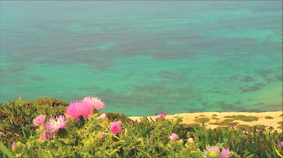 Flower Plant Nature Beauty In Nature Pink Color Outdoors No People Travel Quiet Sea Flower Head Bizerte Tunisia Travel Destinations white cape north africa