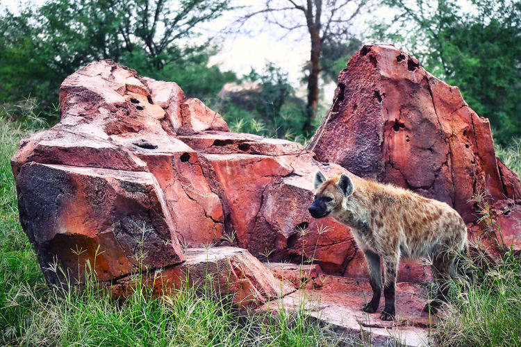 View of an animal on rock