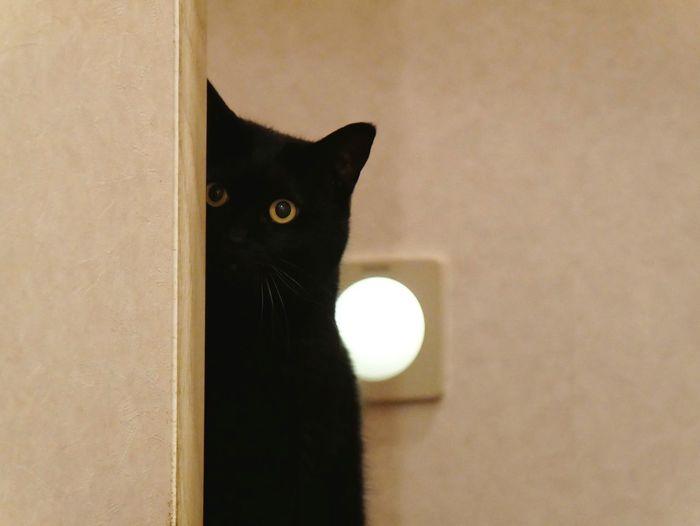 家政婦は見てた Cats Of EyeEm Cats Lovers  Neko Cats Black Cat 家政婦は見た ねこ 猫 にゃんこ Animal Eye Cat Kitten