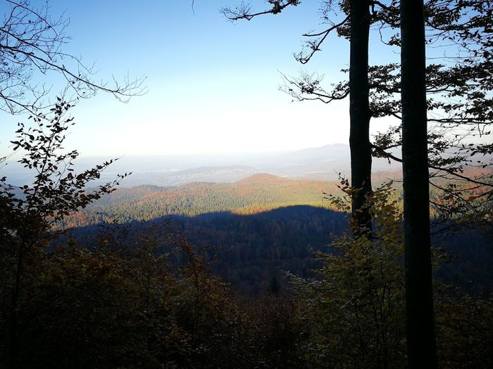 Forest Clear Sky No Civilization Shadow Wild Tree Mountain Forest Sky Landscape Calm