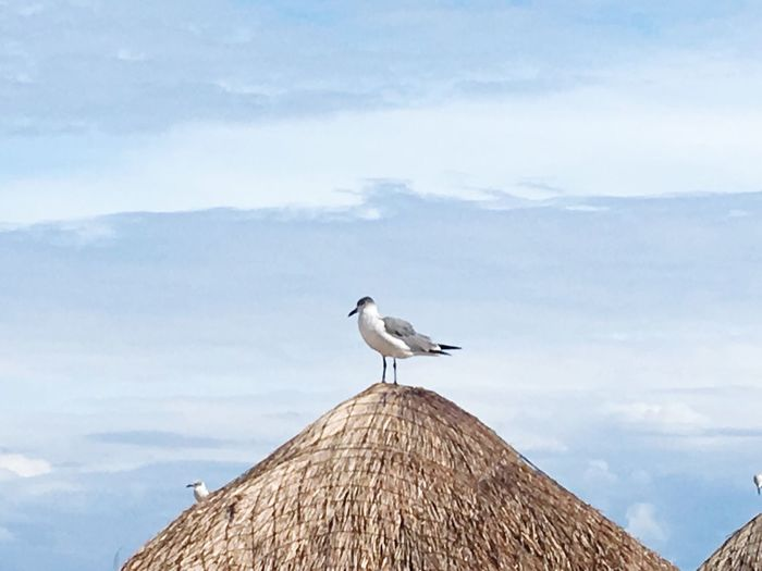 Look up in the Sky Bird Vertebrate Animal Wildlife Animal Themes Animal Cloud - Sky Sky One Animal Seagull Low Angle View Scenics - Nature