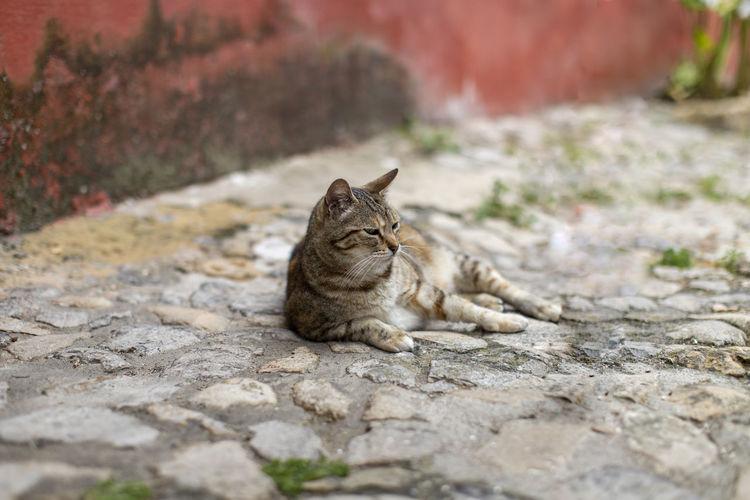 Cat resting on footpath