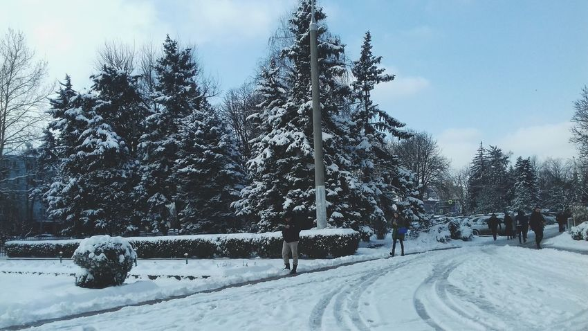 Citylife #filters #Goodmorning  #photo #cold Tree Snowing Snow Cold Temperature Winter Forest Pine Tree Frozen Pinaceae Snowdrift