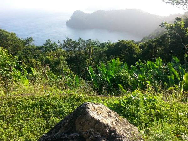 Cliff Trees Shore Trinidad And Tobago Adventure Work Travel Pitstop Roadtrip 2014 Rock Pyramid Shape Weeds Water