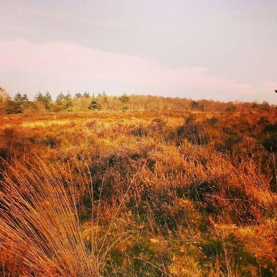 Nature Green Forest Woods Moor  Lands Fields Plants Military Practise Field Spring Weather Enjoy 420 Bjorngruppen Dutch