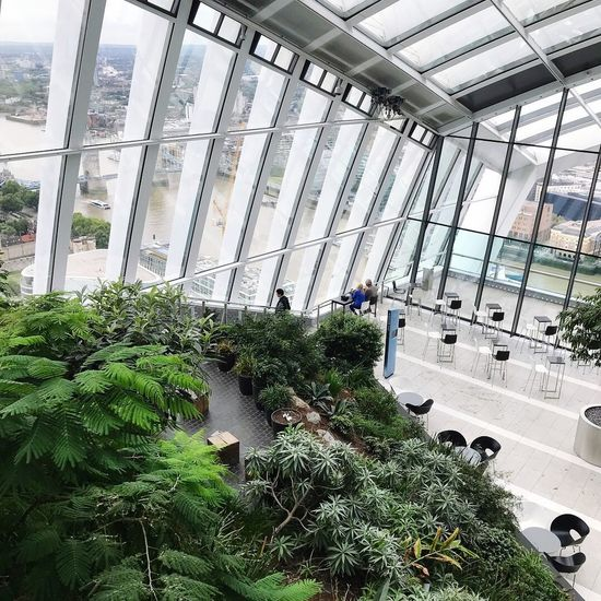 Sky Garden Plant Greenhouse Growth Day Indoors  Architecture Built Structure