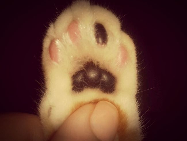 My cat's paw! ♡♥♡ Relaxing Taking Photos Photographylover EyeEm Best Shots Lovely Cat 😻 EyeEm Animal Lover MyLittleCat 💕 🐱