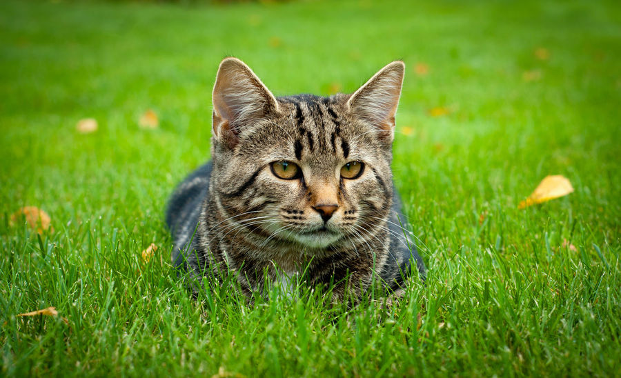 Cat Lovers Citty Cat Life Wildlife Photography Gross Zen Cat Pet Wild Citty Nature Relax Cats Hunting Young Animal Adult Kitty Cat Kitty Grass
