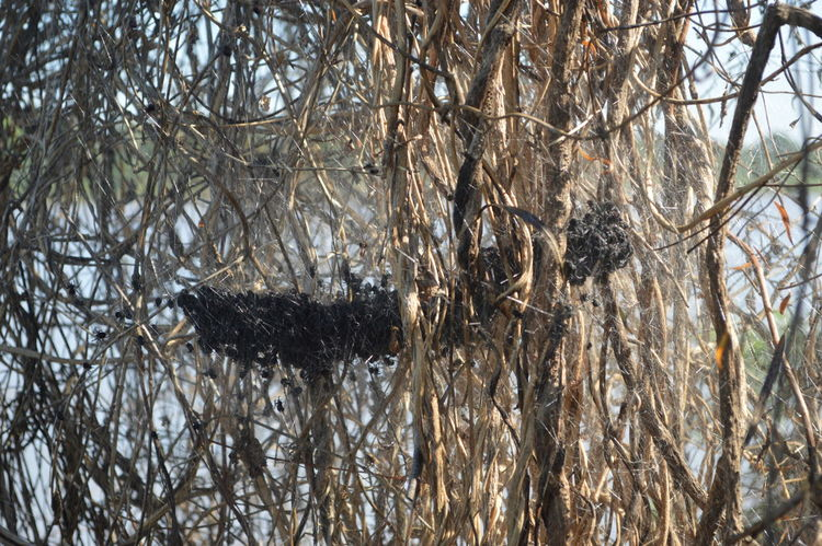 Spider nest Tree Animal Themes Animal No People Nature Animals In The Wild Plant Branch Animal Wildlife Water Forest Outdoors Day Insect Spider Nest Nesting