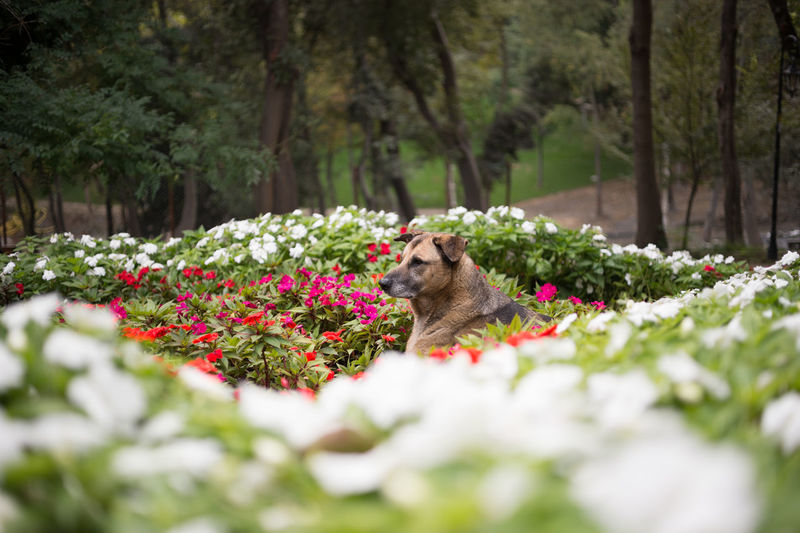 Stray Dog Amidst Flowers At Park