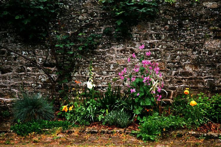 Dinan Bretagne France Beauty In Nature Ektar 100 Film Photography Flower Freshness Growth On The Rain On The Rainy Days Outdoors Plant Tree