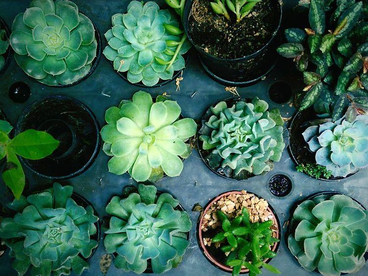 Cactus Plants Plant Pots Nature Growing Plants Lazy Sunday Coffee Shop Decoration Bangkok Thonglor