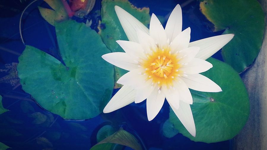 I love flowers. And this lotus captures my heart.
