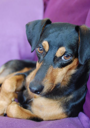 Joy Dogoftheday Love♡ Family Happy Dog Rescuedog Spanish Dog Dogs Life DogLove Freedom